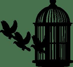 bird-3879179